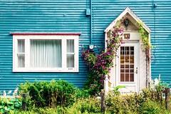 Door and window (-liyen-) Tags: newfoundland stjohns canada door blue window summer flowers fujixt1 explore challengeyouwinner