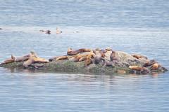Elephant seals, Alaska (Karlov1) Tags: