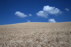 Montefeltro (Antonio Martorella) Tags: antomarto ntomarto italia italy marche montefeltro paesaggio landscape cielo sky nuvole clouds cloud grano wheat longexposure blu blue minimalismo minimal