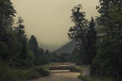 Valley of Trettach (Netsrak) Tags: nebel regen trettach oberstdorf deutschland bayern baum bäume wald fluss flus alpen gebirge berg berge