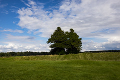 two trees (Mark Rigler UK) Tags: two trees wishing dorset blue sky green grass