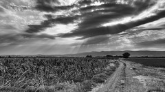 Popovac Apocalipto (coa75) Tags: blackwhite nature abstract cornfields road dirt landscape horizon sky dramatic sunrays