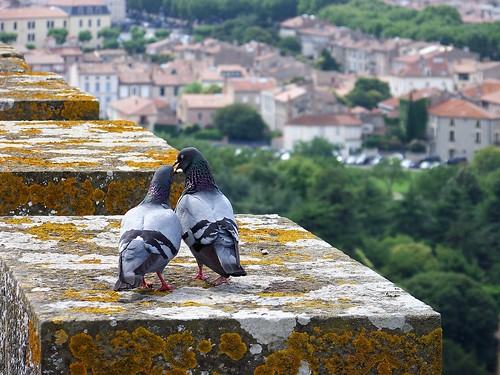 Amour on the battlements