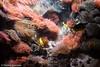 IMG_0701 (10Rosso) Tags: acqua acquario genova pesci pesce mare acquariodigenova aquarium genovaacquarium