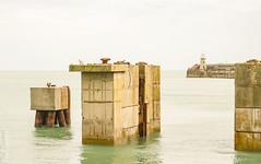 Concrete, sea and seagull! (philbarnes4) Tags: sea concrete folkestone kent england philbarnes dslr nikond80 coast engineering harbour harbourbeacon