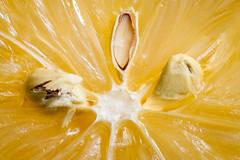 222:365 - Lemon...