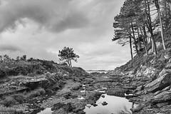 Irland Ring of Kerry 13 b&w (rainerneumann831) Tags: irland bw blackwhite ©rainerneumann ringofkerry landschaft bäume klippen meer ufer küste