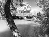 Move with the season (.KiLTRo.) Tags: austin texas unitedstates us kiltro trees water river colorado park city nature bridge