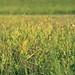 back to summer (_andrea-) Tags: meadow swallowtail schwalbenschwanz butterfly schmetterling insekten ritterfalter sony alpha 7m2 sonyzeiss objektiv mount carlzeiss summerday love 50mm sonyzeissplanar fantasticnature