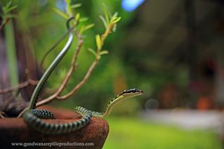 urban wildlife of Thailand (1)