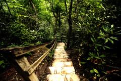 Hold On (dorameulman) Tags: linvillegorge linvillefalls landscapephotography landscape stairs steps fencedfriday fence northcarolina nc dorameulman haiku canon7dmark11 canon outdoor