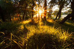 Bathed in sunshine (marcmyr) Tags: sunset sunlight sonnenuntergang rays nature natur sun peaceful ireland summer warm sommer sparkle star nikon d5200 forest enlightened wald light kerry