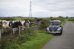 first shake down run 1 (Dave S Campbell) Tags: volkswagen vw fester 1967 black kafer sparkafer beetle bug restoration respray motolita german scotland glasgow test