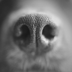 ☼ ☼ ☼ (TanieBlue) Tags: tanieblue 5dii canon canonphotography photos canonphoto photographerbelgium photography photo photographie canonbelgique instagram 500px flickr blackandwhite monochrome noiretblanc dog ngc