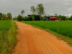 Red Roads of Isaan (SierraSunrise) Tags: thailand phonphisai nongkhai house road dirt unpaved farmstead rice paddy paddies ricepaddy paddyrice poaceae grain farming red agriculture