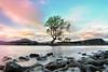 That Tree (Firmin_) Tags: newzealand nouvellezélande nz nikon d3000 18105 travel voyage tree lake lac arbre nature wanaka