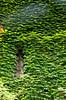 IMGP0757 (fLobOOk) Tags: cordes sur ciel cordessurciel aveyron tarn village médiéval histoire chien chat france europe garonne tarnetgaronne