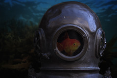 Fish bowl (Michel Couprie) Tags: sea underwater undersea vegetation algae surface water composition compositing helmet diver diving fish goldfish metallic metal
