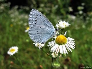 Butterfly 1433