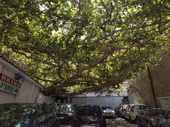 One of the coolest trees ever - Athens, Greece (ashabot) Tags: nature tree cool beautiful awesomenature athens athensgreece