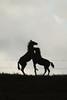 Foals (Wellandok) Tags: horse foal fohlen pferde koppel paddock