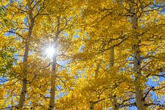 *let the sun shine...* (albert.wirtz) Tags: albertwirtz aspen tree owlcreekpassroad colorado usa unitedstates america nordamerika herbst fall autumn autunno wald forest sun sonne sunstar sonnenstern backlight gegenlicht natur nature natura goldener golden goldenautumn goldenfall ouray zitterpappel turningleaves herbstlaub laubfärbung ridgway silverjackreservoir countyroad8 usasouthwest letthesunshine sunshine sonnenschein sanjuanmountains southwest südwesten yellow gelb orange blue blau nationalforest