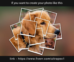 https://www.fiverr.com/ultrapex1 (ultrapex1) Tags: photoshop editing edit online graphic design modern concept background art creative banner creativity designer digital layout cover card professional drawing skill artist idea imagination inspiration thinking color abstract think strategy decoration unique work pencil dog pet animal cute puppy canine happy young fun breed funny isolated smile portrait mammal terrier friend doggy domestic cheerful love labrador sitting people lifestyle home face dachshund golden smiling beautiful brown collage