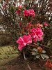 e se todo o verde da natureza fosse rosa? (ganimede-kun) Tags: flores rosa corderosa plantas verde pink flower brazil colors cores brasil natureza nature