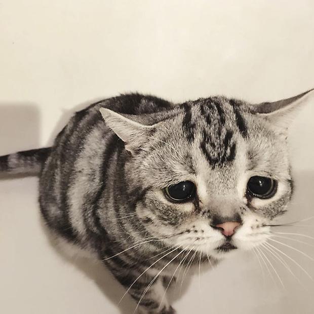 Nhìn bộ mặt buồn thiu như mất sổ gạo của boss mèo đáng yêu, con sen nào cũng muốn ôm lấy một cái - Ảnh 17.