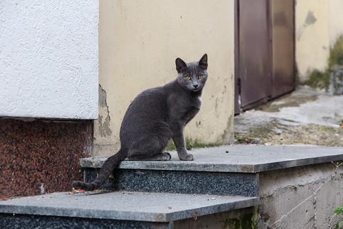 cat234, citizen of Sarajevo