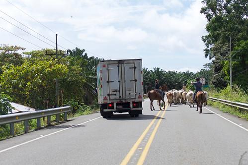costa-rica-osa-thomas-trip11