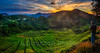 Sunrise over Boh Tea Estate (whitworth images) Tags: teaplantation landscape crop teagardens cameronhighlands hilly clouds horticulture teaestate southeastasia camellia lensflare green pahang flare asia highlands nature dawn early panorama hills steep tea plantation malaysia morning orange sky panoramic sunrise colonial scenic camelliasinensis outdoors sun agriculture yellow tanahrata valley