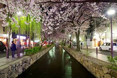 Kyoto Sakura (hjkwantstoknow) Tags: japan nippon kyoto sakura cherry cherryblossom night vanishingpoint water urban street