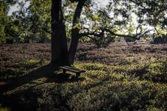 Happy Bench Monday! (michael_hamburg69) Tags: lüneburgerheide niederhaverbeck bispingen germany deutschland heide heath heather heathland heideland wilsederberg bank holzbank tree baum bench hbm happybenchmonday