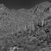 Morning Views of the Tucson Mountains (Black & White)