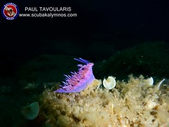"""Kalymnos Diving • <a style=""""font-size:0.8em;"""" href=""""http://www.flickr.com/photos/150652762@N02/35629973324/"""" target=""""_blank"""">View on Flickr</a>"""