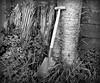 An Old Tool (sallyNZ) Tags: bw tool shovel spade garden 52in2017challenge ansh scavenger12