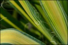 A clef in front of green (Herr Nergal) Tags: fz1000 lumix panasonic flower plant green grün schön macro makro close up bridge point shoot 1 notenschlüssel faden thread 7dwf hbw germany saarland deutschland pflanze