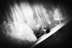 crashed dreams (Neko! Neko! Neko!) Tags: purpose meaning symbolic death moth imagination blackandwhite blackwhite bw mono monochrome surreal surrealism expressionism feeling emotion mood dreams emotional