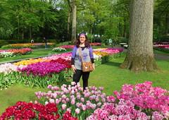 Amsterdam-May'17 (81) (Silvia Inacio) Tags: tree árvore tulipa tulip flowers flores keukenhof lisse garden jardim park parque holland holanda thenetherlands amsterdam amesterdão