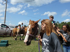 8/5/17 - Beckwith Orchards: Byron (mavra_chang) Tags: kentlionssweetcornfestival 10thannualkentlionssweetcornfestival animals equines horses domestichorses ponies