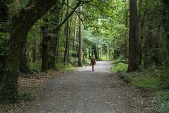Mi Camino (EDU S.G.) Tags: caminodesantiago frances camino santiago ruta path countryside country galicia españa coruña bosque forest peregrino arzua compostela pilgrim soledad loneliness caminar walk stroll nikon j1 sendero espiritual