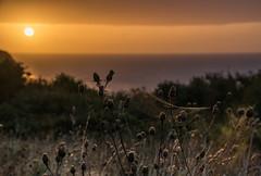 Dawn Spinner (Shastajak) Tags: justaftersunrise dawn daybreak spidersweb web thistles seedheads morning bokeh