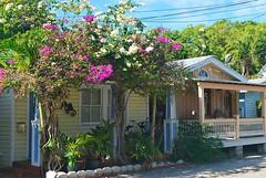 Key West (Florida) Trip 2016 0365Rif 4x6 (edgarandron - Busy!) Tags: florida keys floridakeys keywest house houses building buildings plants flower flowers