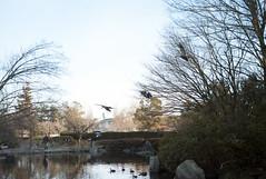 L1017154c (haru__q) Tags: leica leicam8 m8 jupiter12 jupiter bird 鳥 tree 木