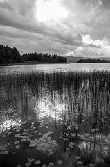 Storsjön (Stefano Rugolo) Tags: pentax k5 smcpentaxda1855mmf3556alwr verticalformat lake storsjön sörforsa hälsingland sverige sweden landscape monochrome clouds sky water blanckandwhite reflection nature tranquillity lilies reeds stefanorugolo