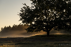 early morning (PGKreling) Tags: approved morning early veluwe holland veluwezoom dutchlight hollandslicht mist fog color golden trees nature landscape