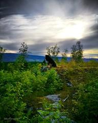 Love the view 🐕 (evakongshavn) Tags: landschaft landscape landskap beautyinnature naturelovers natur nature naturnature naturaleza naturbilder naturphotography naturephotography mountain mountains randsfjorden norge norway fjords fjordsofnorway