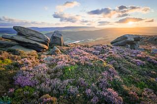 White Tor Heather Sunset - Peak District Photography