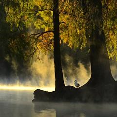 _DSC5232 (NIKONIANO) Tags: photostream dream surreal tree árbol agua aqua water river lake lago lagodecamécuaro méxico mexique surrealism